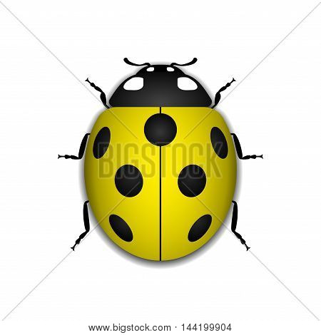 Ladybug small icon. Yellow lady bug sign isolated on white background. 3d volume design. Cute colorful ladybird. Insect cartoon beetle. Symbol of nature spring or summer. Vector illustartion
