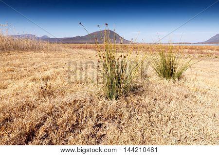 Grass - Graaff-reinet Landscape