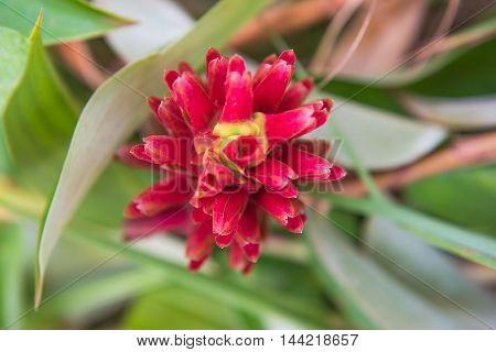 Beautiful fresh flower petals ,   red color Closeup  background