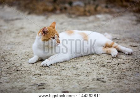 Fanny cat rest in garden