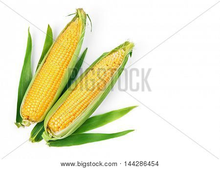 Corn corncob with green leaves ripe vegetables harvest yellow seeds. Isolated on white background
