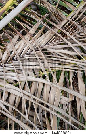 close up dry coconut leaves on the ground