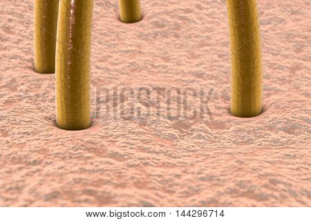 3d illustration of human skin with hairs, microscopic view of skin, microscopic view of hairs