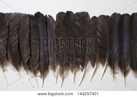 Black raven feathers on a gray background