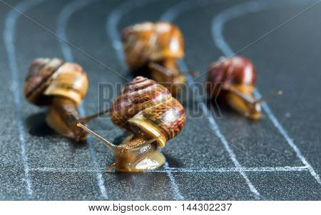 Snails on the athletic track moves the finish line
