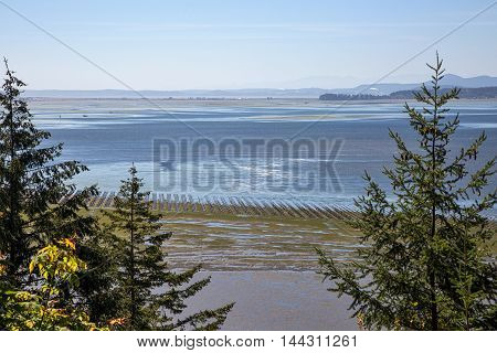 Growing oysters at Samish Bay Washington viewed from Pigeon Point