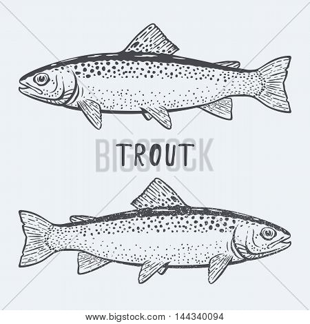 Trout fish black and white vector illustration