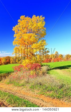 Autumn leaves on rolling countryside farmland fall colors
