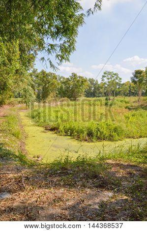 close up country landscape in Nakohn nayok thailand