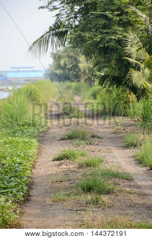 dirt road in country Nakhon Nayok Thailand