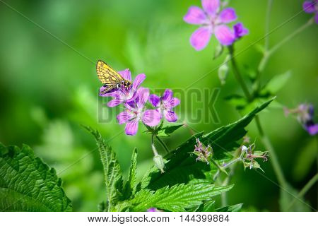 Butterfly on flower in the summer garden
