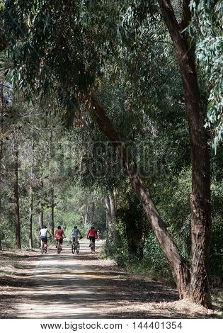 Group of unrecognised bikers biking on a forest park road