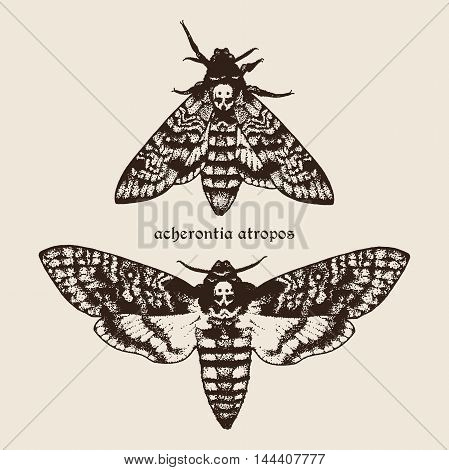 Vector Hand Drawn Deaths Head Hawk Moths Illustration.