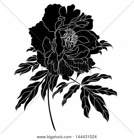 Black flower, bloom flower, blossom flower, peony flower, graphical flower, monochrome flower, isolated flower, silhouette flower, sketch flower. Vector