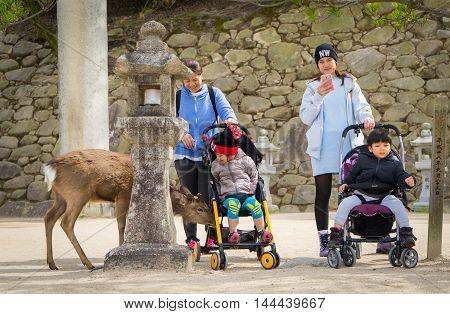 Hiroshima, Japan - March 16, 2016: Miyajima on March 16, 2016. Tourists are taking picture of Miyajima's Deer.