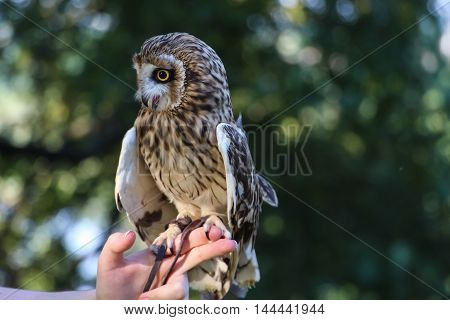 a small light in the green forest owlet