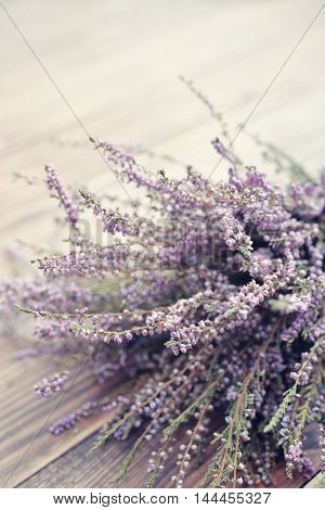 Calluna Vulgaris, Heather