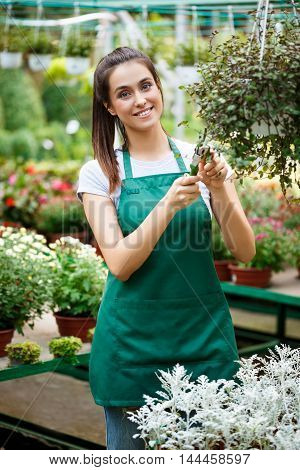 Young beautiful female florist taking care of flowers.