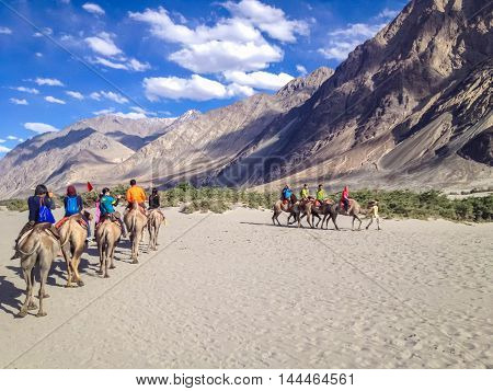LEH LADAKH INDIA - July 9 2014 : Unidentified tourist ride carmels at Hunder village in Nubra Valley Ladakh Jammu and Kashmir India.