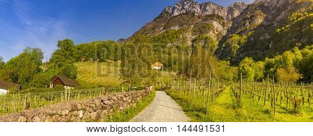 Country road through vineyards to the mountains - Picturesque scenery taken in Quinten village Switzerland with a rural road crossing vineyards and leading to the peaks of the Swiss Alps mountains.