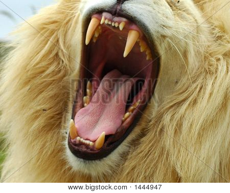 Teeth Of Lion