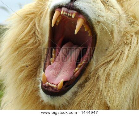 И зубы у них как у львов
