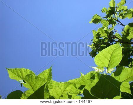 Greenly Blueness