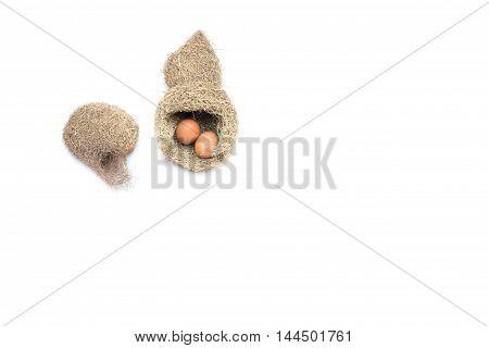 Skylark Nests and egg  Baya weaver bird  on white background.