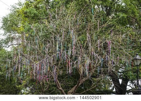 Colorful necklaces hanging in the trees of New Orleans