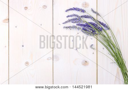 Freshly cut lavender on vintage white wood background