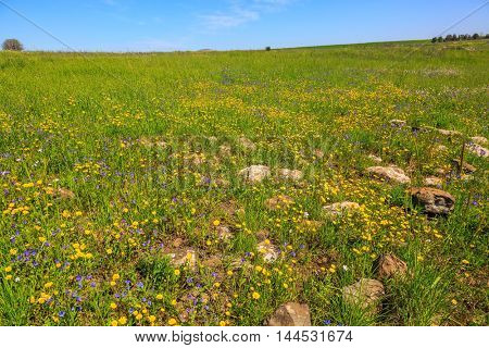 Flat hills are covered with a continuous carpet of wild flowers. The spring blossoming Golan heights