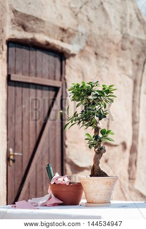 bride and groom is Planting a little tree into a small pot. symbol of new life