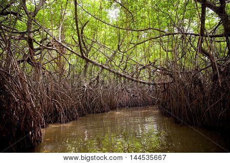 Jungle Swamp Madu Ganga river - Sri Lanka