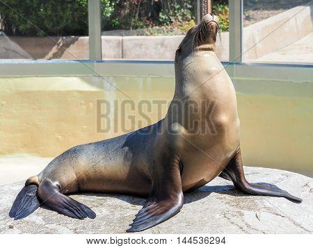 Sea Lion Sitting On The Rocks