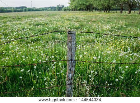 Barbed wire fence on pasturage in Mazowsze region in Poland