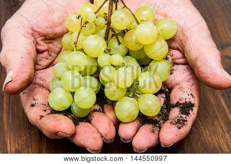 Man hand holding a bunch of green grapes