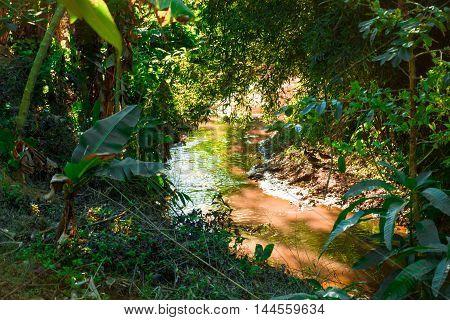 floresta com paisagem tropical cortada pelo rio