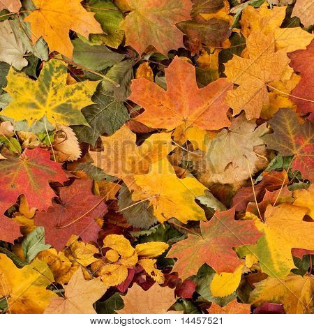 Colorful autumn background (studio shoot with a natural stuff)