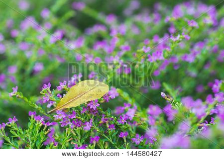 Cloe-up of a yellow fallen leaf on many small purple flowers with green leaves.