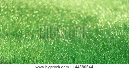 Panoramic view of countless dewdrops glowing on green field in the morning.