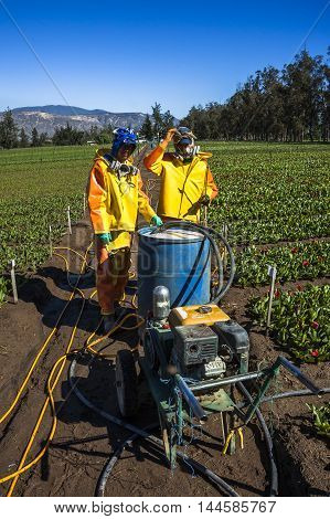 Technical Fumigating A Flower Plantation Outdoors.