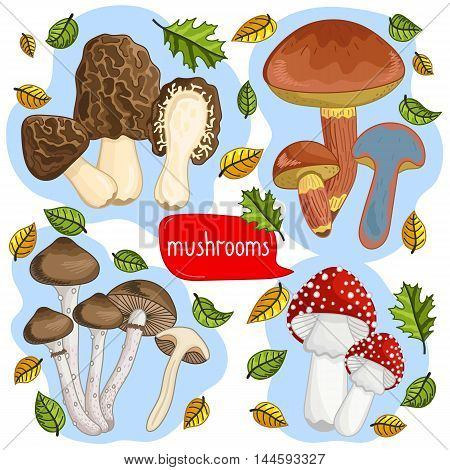 Mushroom isolated on white background. Vector mushroom and forest mushroom set. Different mushroom size. Half mushroom and small mushroom collection. Vegetarian food. Raw mushroom. Autumn mushroom. Cartoon mushroom illustration.