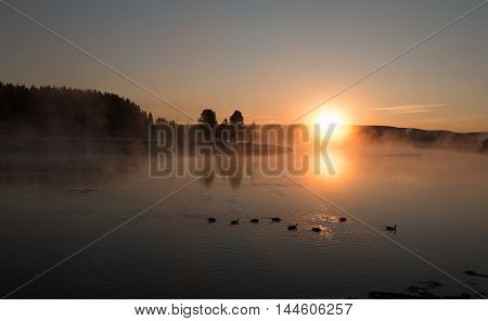 Sunrise reflecting through early morning mist on Trumpeter Swans and Canadian Geese swimming in the Yellowstone River in Yellowstone National Park in Wyoming USA