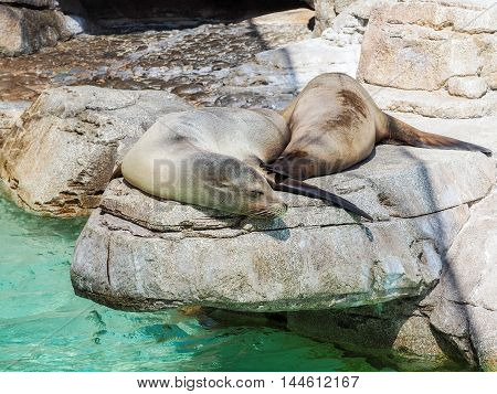 Close Up Of Sea Lions