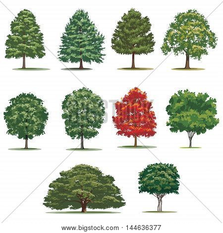 Realistic trees pack. Isolated vector trees on white background.