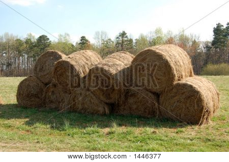 Hay Bales In A North Carolina Field