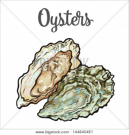 Fresh oyster, sketch style vector illustration isolated on white background. Drawing of oysters as luxury seafood delicacy. Edible underwater creature, healthy organic seafood or shellfish food