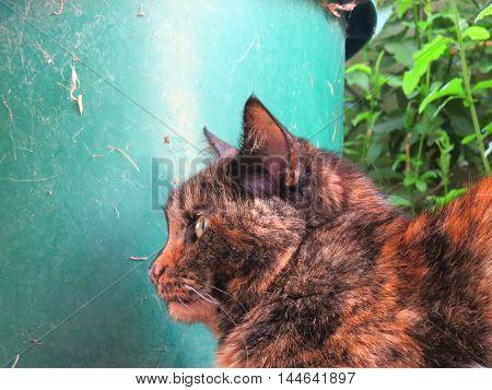 Tortoiseshell cat sitting near garden pot plant
