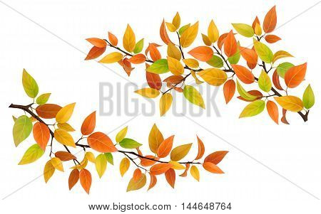 Tree branch with autumn leaves green, red and yellow. Vector set detailed element.