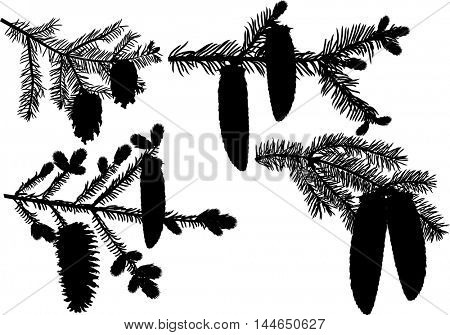 illustration with fir branches isolated on white background